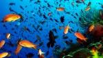 View the album Diving Komodo Island